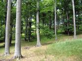 lesy v LPK