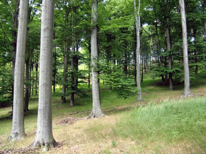 lesy vLPK